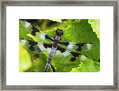 A Dragonfly Warms Up In A Vegetable Framed Print by Robert L. Potts
