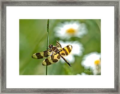 A Dragonfly's Life Framed Print by Cheryl Baxter