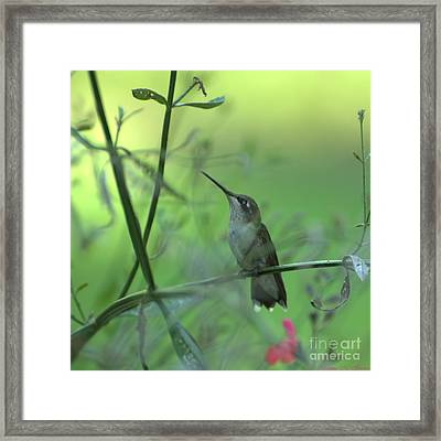 A Dreamer  Framed Print by Donna Brown