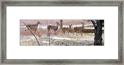 A Dusting On The Deer Framed Print