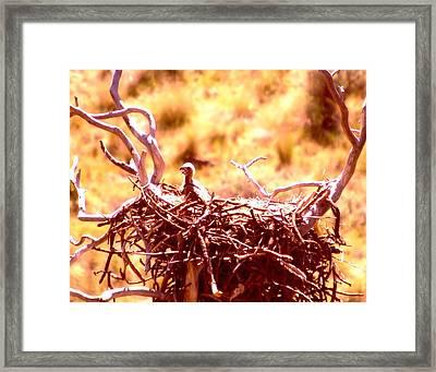 A Eaglet In Down Framed Print