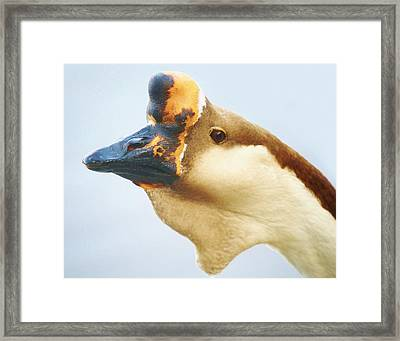 A Face Only A Mother Could Love Framed Print by Paulette Thomas