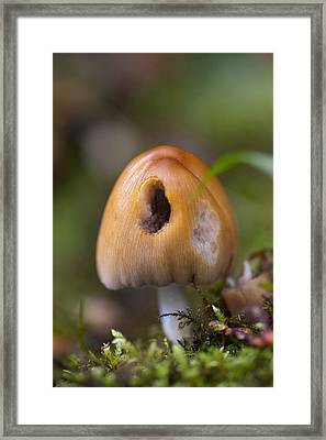 A Fairytale Mushroom Framed Print by Sarah Crites
