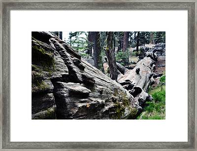 Framed Print featuring the photograph A Fallen Giant Sequoia by Kyle Hanson