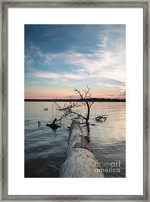 A Fallen Tree In The Dusk Framed Print