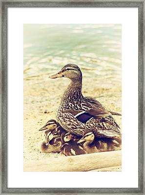 A Family Affair Framed Print