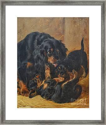 A Family Of Gordon Setters Framed Print