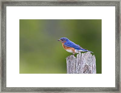Framed Print featuring the photograph A Favorite Perch by Gary Hall