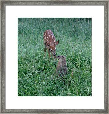A Fawn And A Woodchuck Framed Print