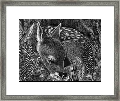 A Fawn In The Ferns Framed Print