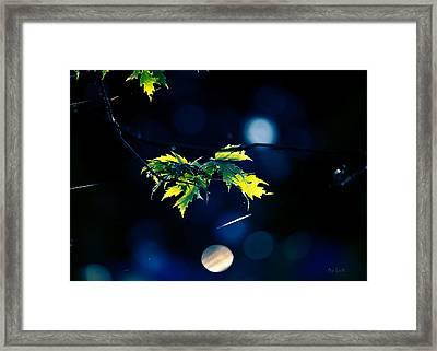 A Few Leaves In The Sun Framed Print