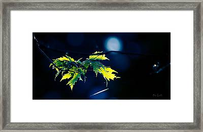 A Few Leaves In The Sun Two Framed Print