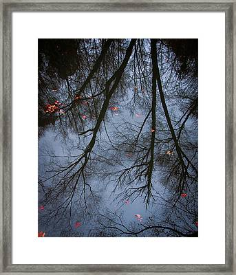 A Few Leaves Left Framed Print
