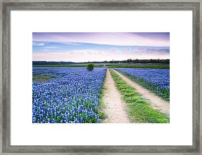 A Field Of Bluebonnets - Wildflower In Texas Framed Print by Ellie Teramoto