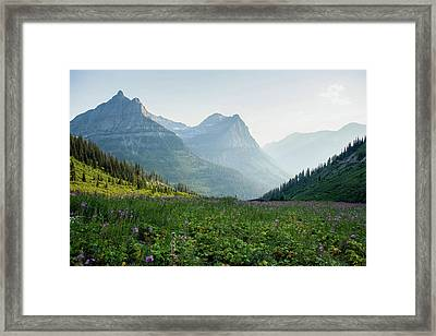 A Field Of Wildflowers At Glacier Framed Print