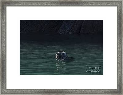 A Fine Day For A Swim Framed Print by Anne Gilbert