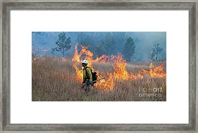 A Firefighter Ignites The Norbeck Prescribed Fire. Framed Print by Bill Gabbert