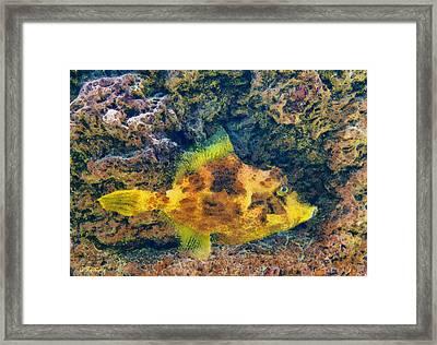 A Fish Called Wanda Framed Print by George Rossidis