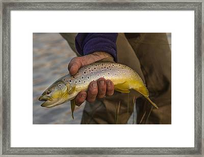 A Fish In Hand Framed Print by Jean Noren