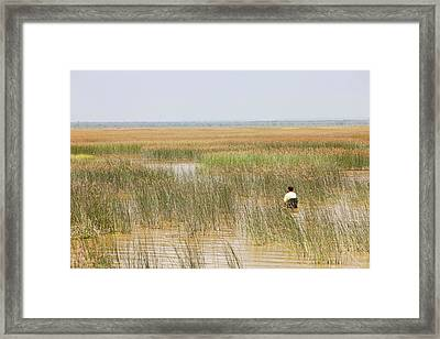 A Fisherman Wading For Fish Framed Print by Ashley Cooper