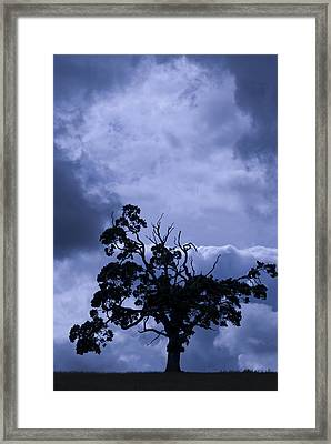 Framed Print featuring the photograph A Flash Of Blue Tree by Sally Ross