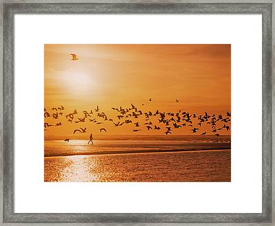 A Flock Of Birds Fly Over The Beach Framed Print by Robert L. Potts