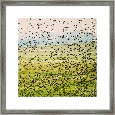 A Flock Of Freedom Framed Print