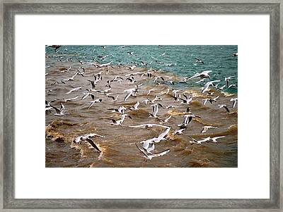 A Flock Of Seagulls Framed Print