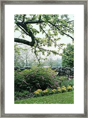 A Flower Bed In Mrs. Frank Audibert's Garden Framed Print by Samuel H. Gottscho
