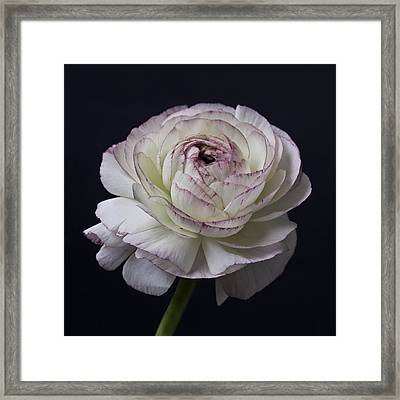 Black And White Flowers Art Work Photography Framed Print by Artecco Fine Art Photography