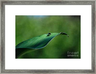 Framed Print featuring the photograph A Fly And His Shadow by Thomas Woolworth