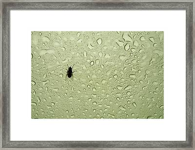 A Fly Takes Shelter Framed Print