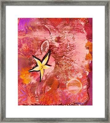 A Flying Star Flower Framed Print by Anne-Elizabeth Whiteway