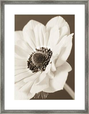 A Focus On The Details Framed Print by Caitlyn  Grasso