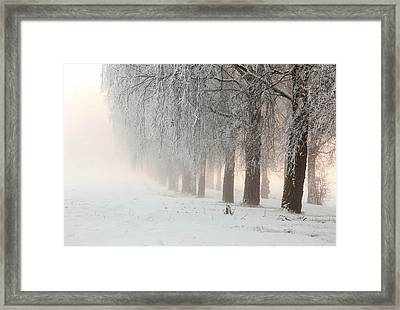 A Foggy Day 2 Framed Print by Thomas Berger