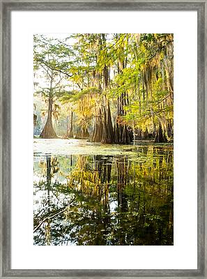 A Forest Of Bald Cypress Trees In The Morning Sun Framed Print by Ellie Teramoto