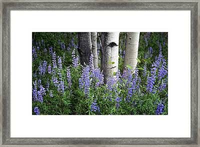 A Forest Of Blue Framed Print by The Forests Edge Photography - Diane Sandoval