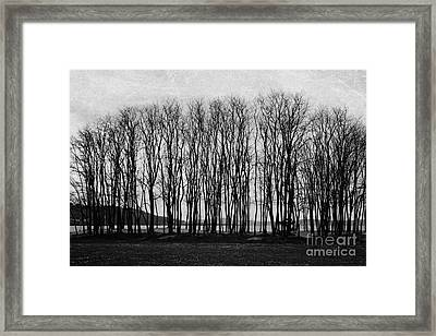 A Forest Of Trees Framed Print
