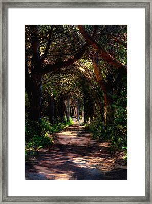A Forest Path -dungeness Spit - Sequim Washington Framed Print
