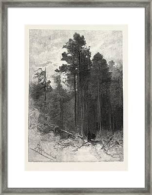 A Forest Pathway, Canada Framed Print by Canadian School