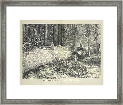 A Forest Scene Framed Print by British Library