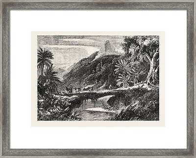 A Forest Scene In Madagascar Framed Print by Madagascarian School