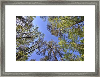 A Forest Sky Framed Print by Gordon Elwell