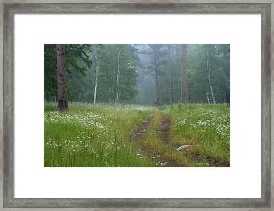 A Forest Visitor Framed Print