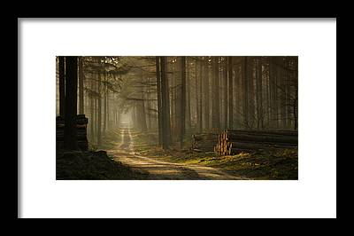 Forest Walk Framed Prints