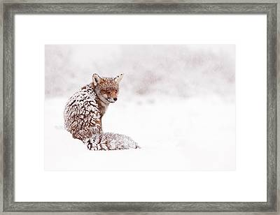 A Red Fox Fantasy Framed Print by Roeselien Raimond