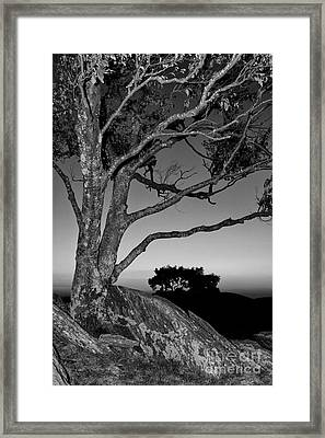 A Fresh Chance At Life Bw Framed Print by Dan Carmichael