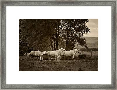 A Friend Indeed - Horses  Framed Print