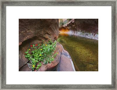 A Frogs Rest Framed Print by Peter Coskun