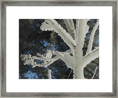A Frosty Morning Framed Print